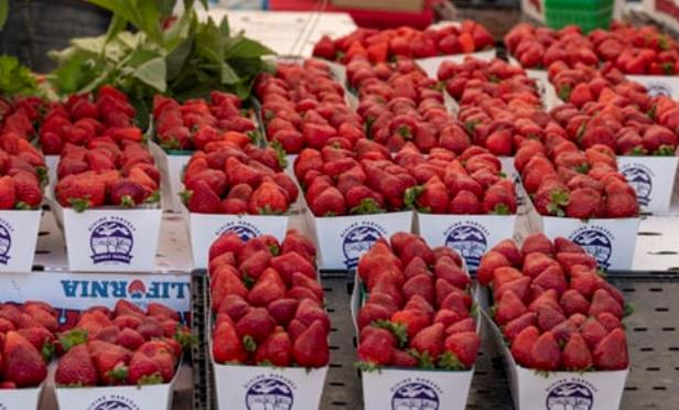 Vincent Balderas strawberries